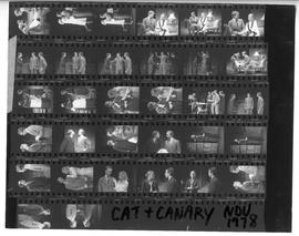 Cat + canary, Nov 1978